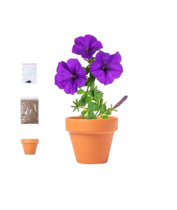 Maceta Terracota con Semillas Flores Petunias